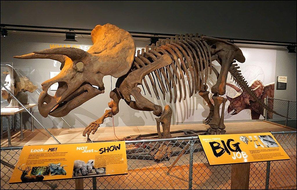 national museum of natural history virtual