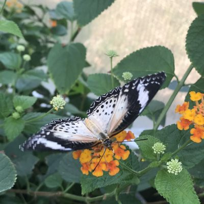 The Wonder of Butterflies: The Butterfly Pavilion, Denver, Colorado