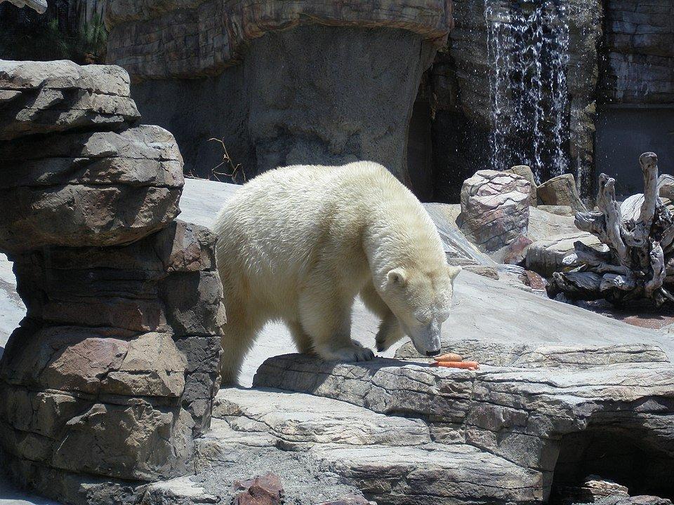 san diego zoo web cams