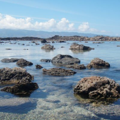 The Good, The Bad, and The Ugly of Shark's Cove Snorkeling on Oahu